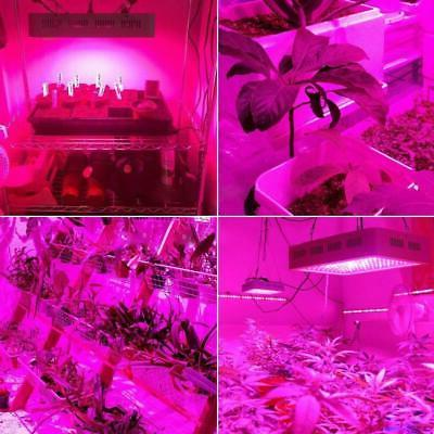 2000W LED Light Full Spectrum Plant Veg Care