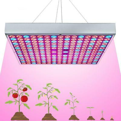 grow light 225 leds indoor