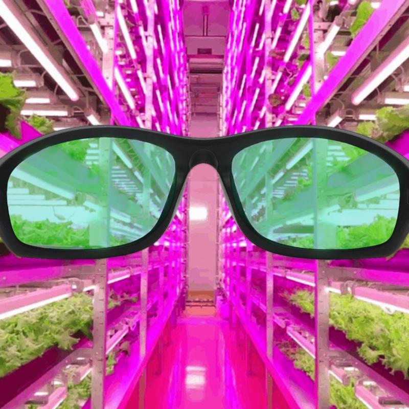 Apollo Indoor Hydroponics Light Room
